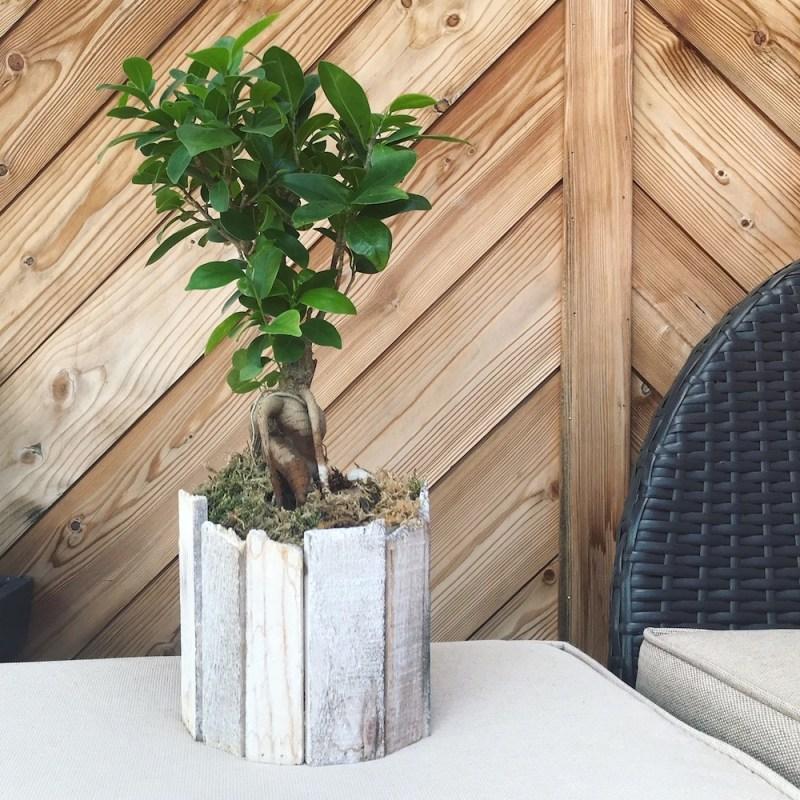 Blumentopf mit Holzverkleidung