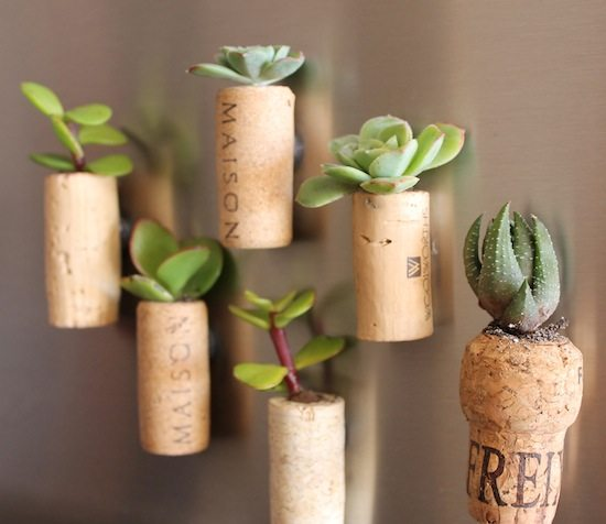 cork planter fridge magnets