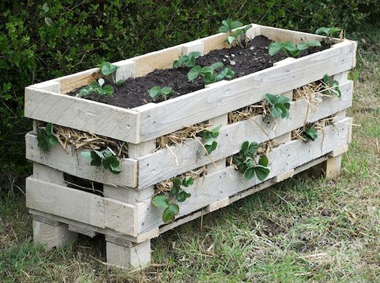 strawberry pallet planter