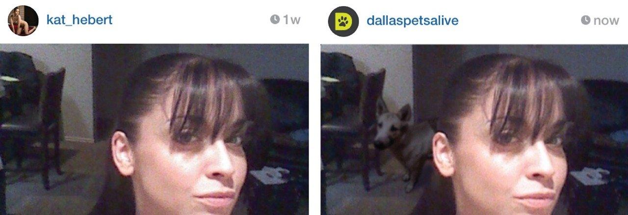 Vira-latas no Instagram