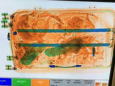 Een onderschepte koffer vol reptielen. Foto: NVWA.
