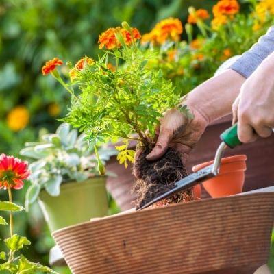 Gardening services near YJ