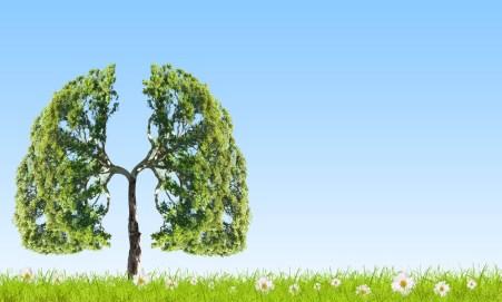 akçiğerler ile ilgili görsel sonucu