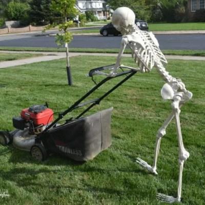 "30 HILARIOUS ""Elf on the Shelf"" Ideas for your Halloween skeleton"