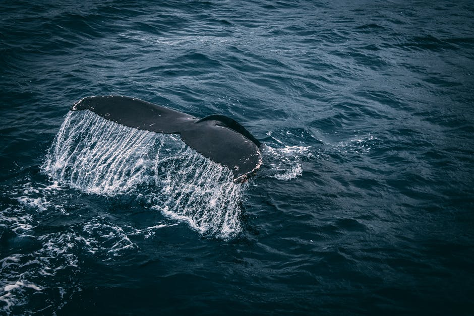 Blue whale colony