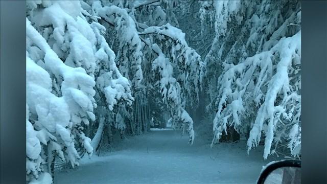 snowy woods_1523285288984.jpg.jpg