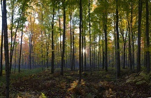 forest-view-small_crop_1529339724402.jpg