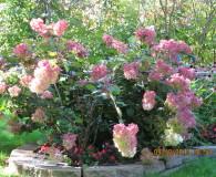 Healing Gardens in Minnesota | Up North Parent Healing Gardens Tour