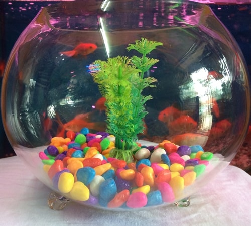 Buy Fish Aquarium Online Goldfish Bowl Aquarium Plant