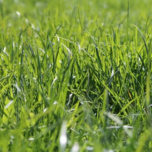 Pasture Walk — July 9th