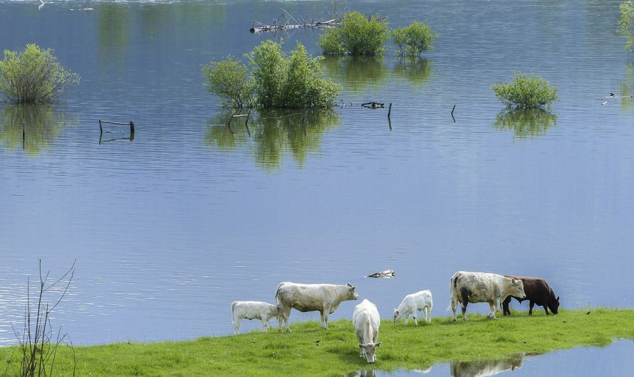 Essential Information on Flooding