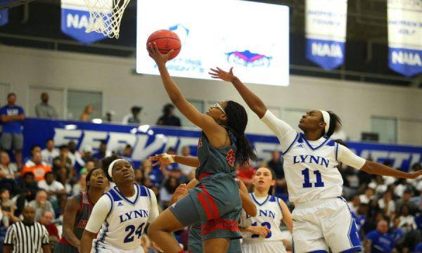 Gallery: FAU Women's Basketball Versus Lynn University ...