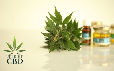 What are the types of CBD products?