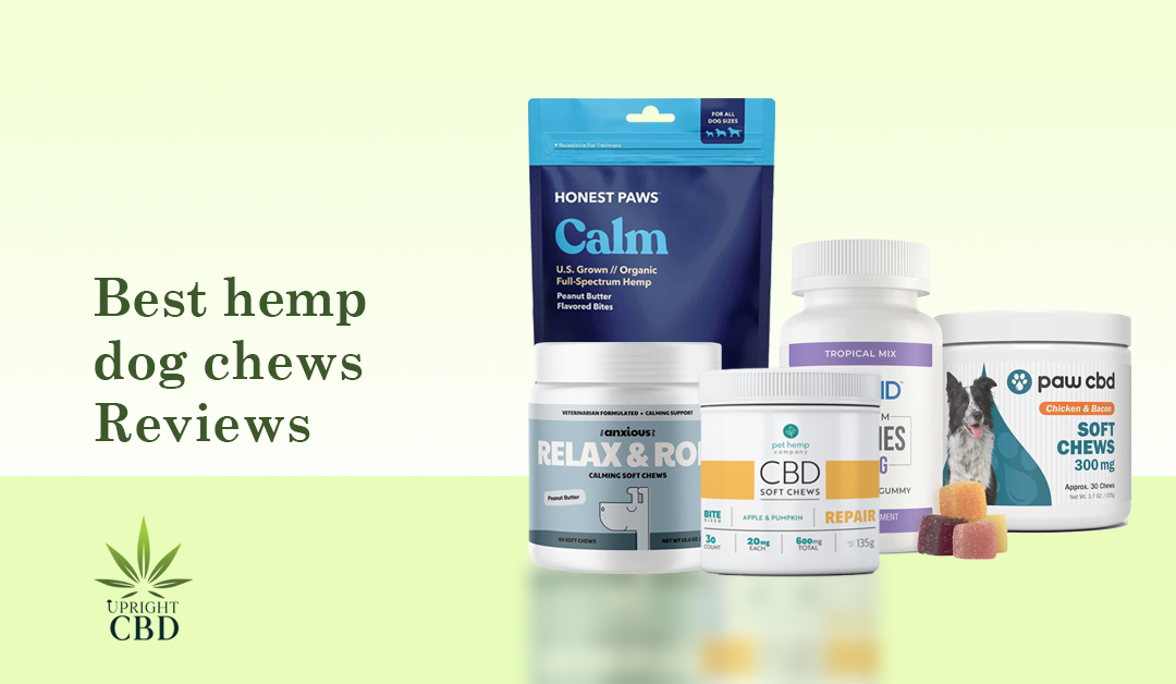 Best Hemp Dog Chews: A Guide to the Top Brands