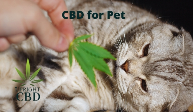 CBD for Pets – step by step Guide for Beginners