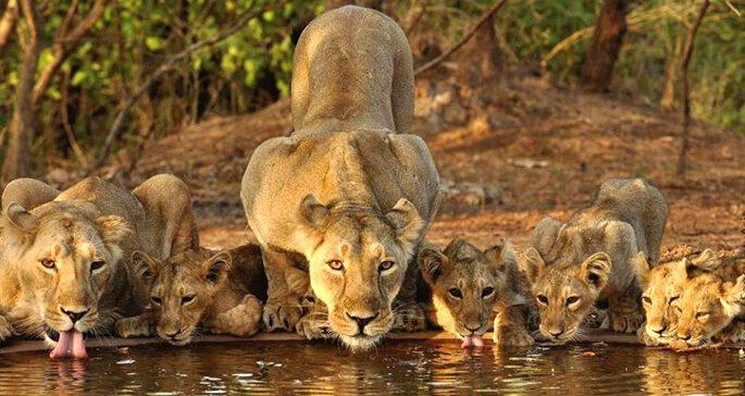 National Park of India