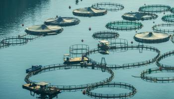 shafri-certification-scheme-for-aquaculture
