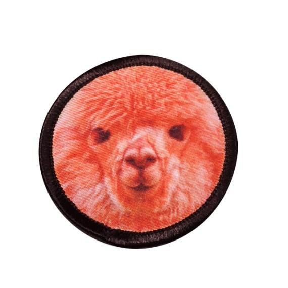 Alpaca_2 copy