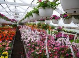 beckers garden center hanging baskets
