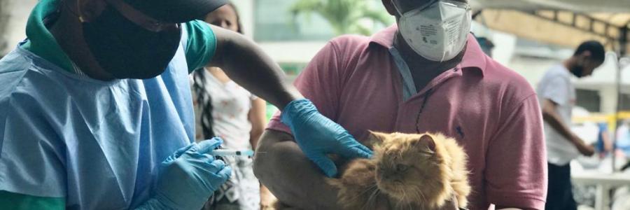 Exitosa jornada de vacunación de perros y gatos en Carepa