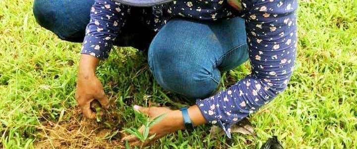 200 PLANTAS DE PECHINDE SE SEMBRARON EN CAREPA
