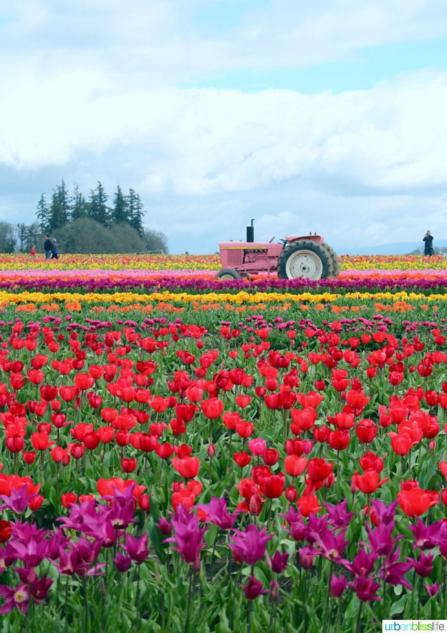 Travel Bliss: The 2016 Tulip Festival