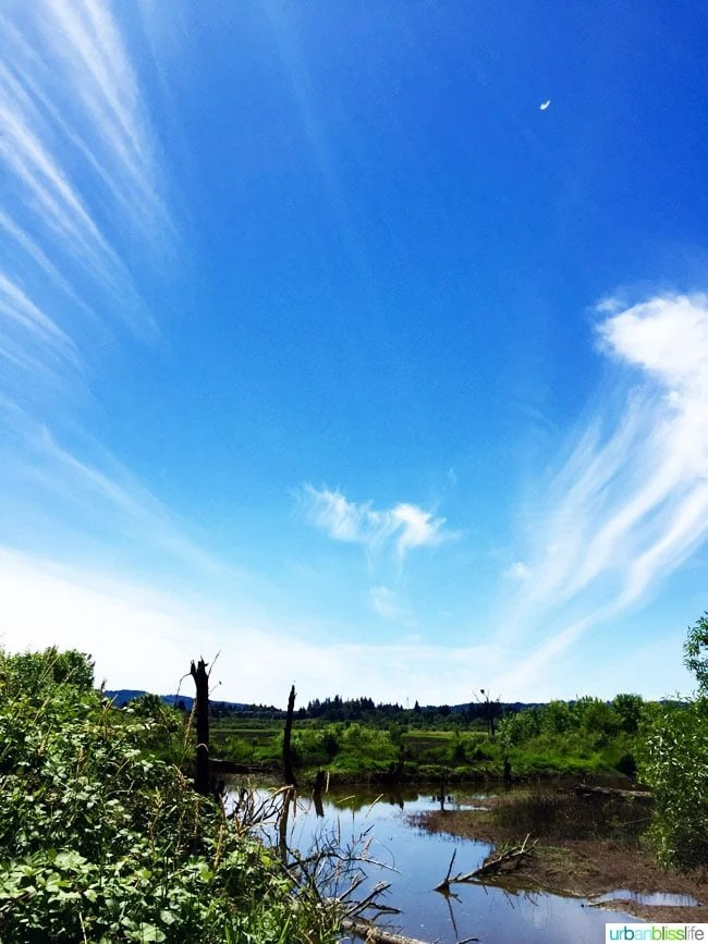 Inner Peace, Forest Baths, and the Tualatin River National Wildlife Refuge