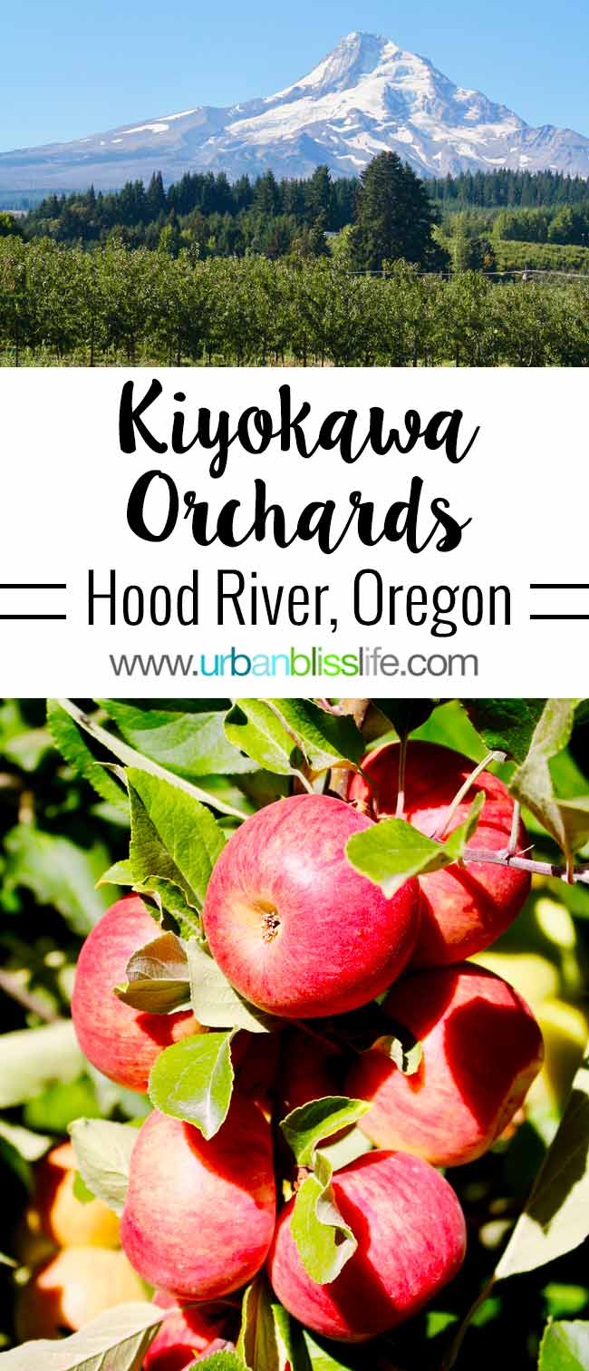 Kiyokawa Family Orchards in Hood River, Oregon. UrbanBlissLife.com