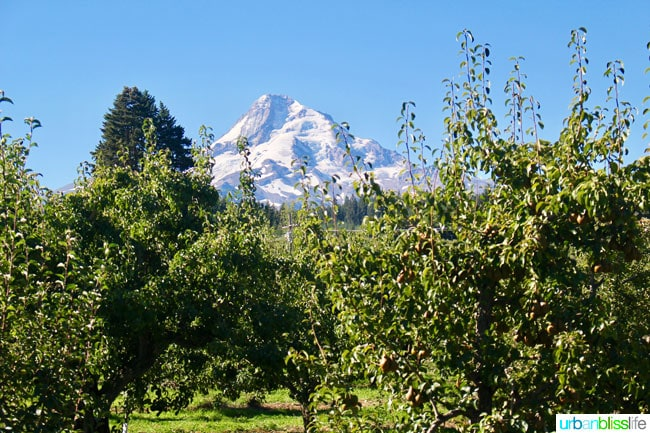 Kiyokawa Orchards in Hood River, Oregon. UrbanBlissLife.com