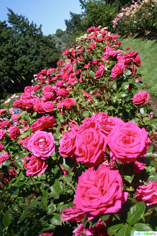 50 things to do in portland oregon with kids during the summer portland international - Portland Rose Garden