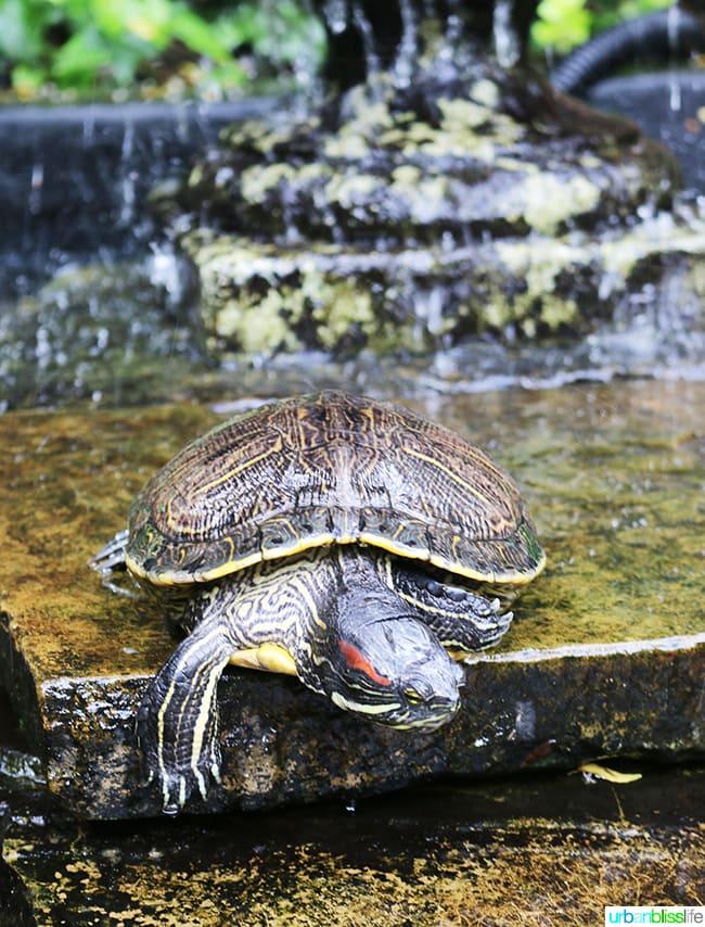 Visiting the turtles at Brennan's Restaurant, travel stories on UrbanBlissLife.com