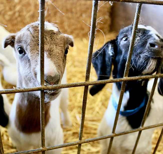 Penny Royal Farm