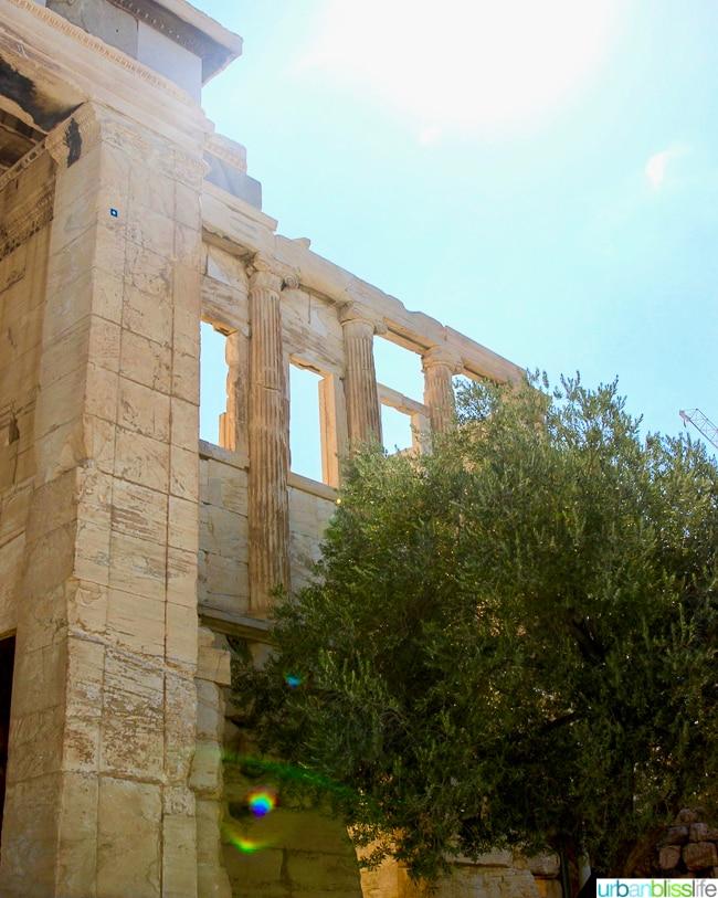 Athena's olive tree at the Acropolis