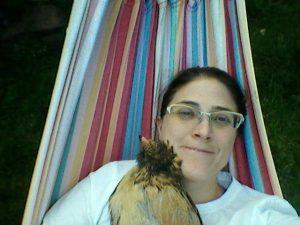 Araucana hen on a hammock