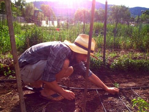 Tim Villard Community Garden 2