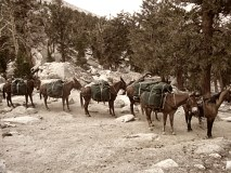mule-pack-pass2