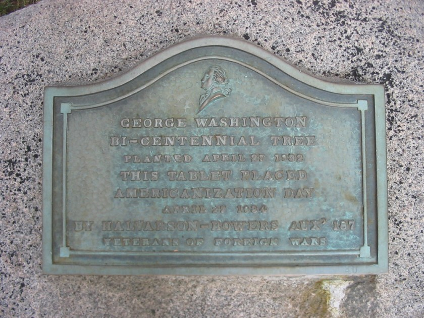 Bronze plaque reading: George Washington/ Bi-Centennial Tree/ Planted April 27 1932/ This tablet placed/ Americanization Day/ April 27 1934/ By Halvarson-Bowers Aux' 187/  Veterans of Foreign Wars.