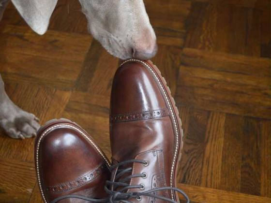 Bodhi Checking Out My Johnston & Murphy Shoes