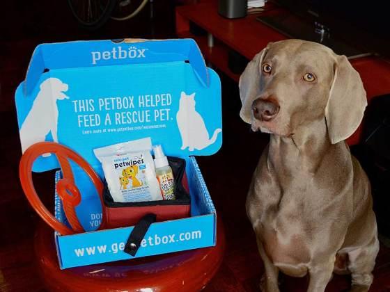 Bodhi's Pet Box