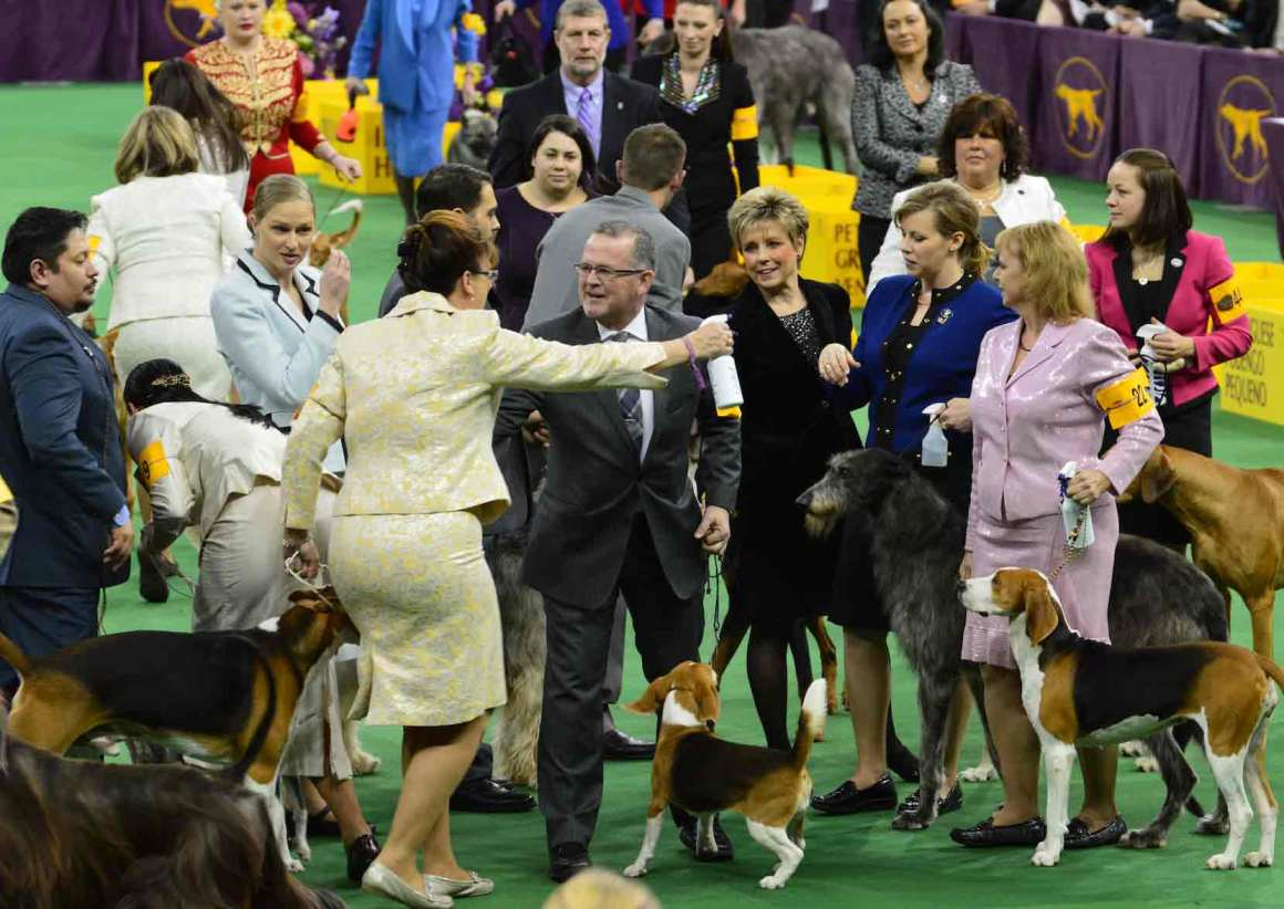 Miss P Wins Westminster