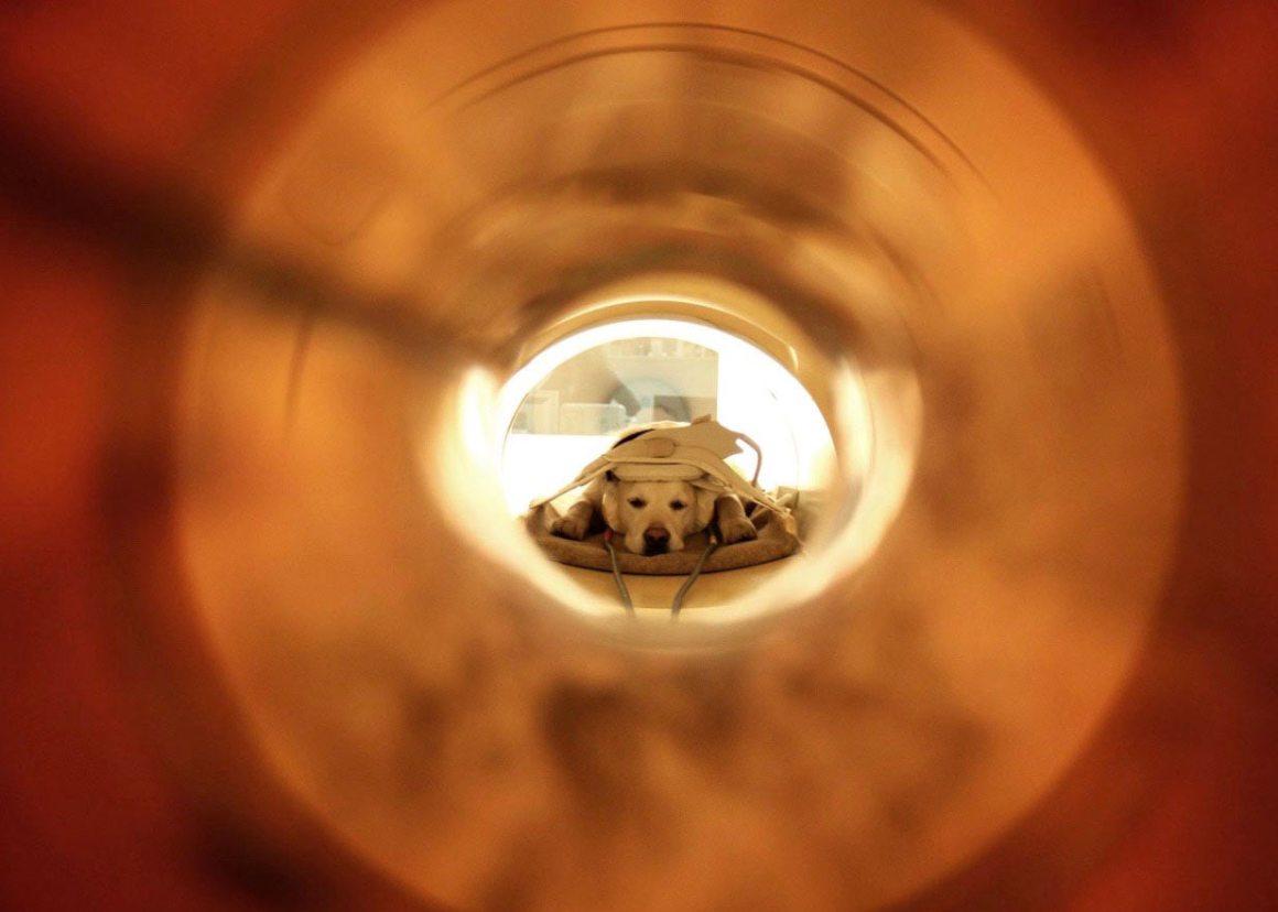 news dogs MRI