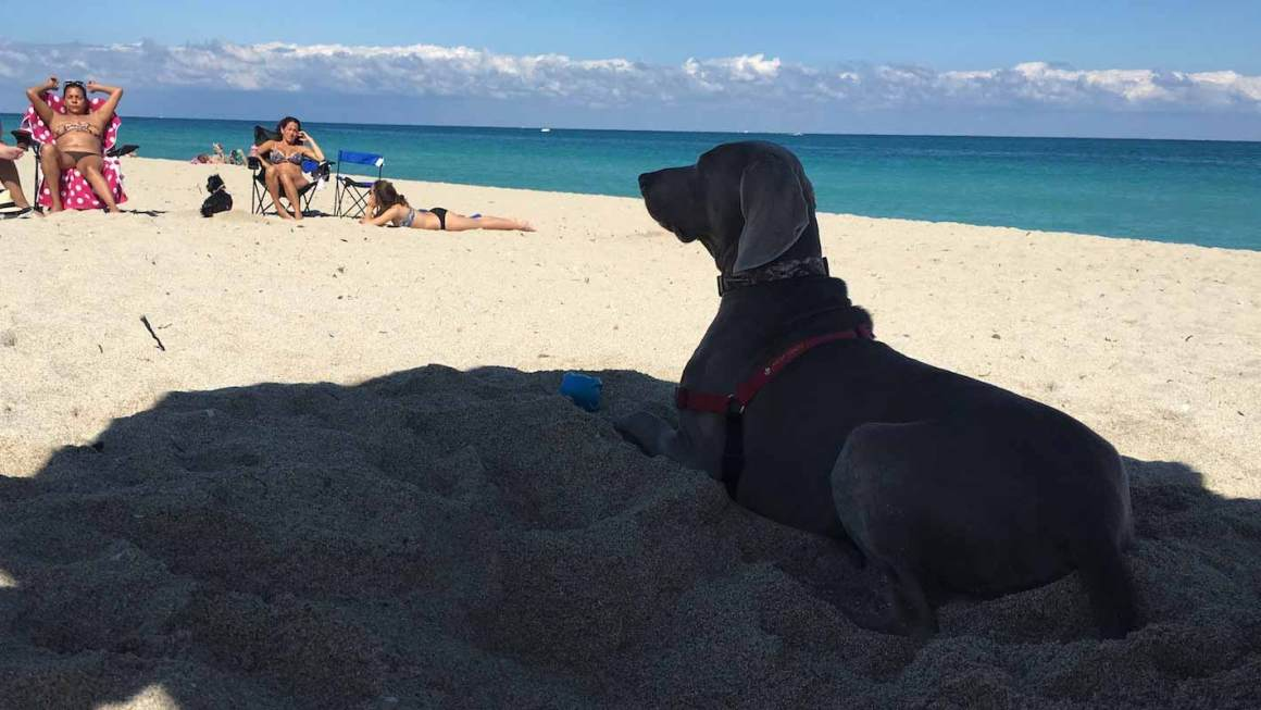 Haulover Dog Beach