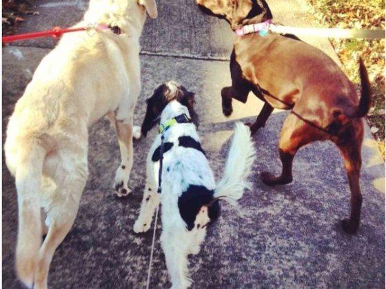 Nora Baldner's Dogs