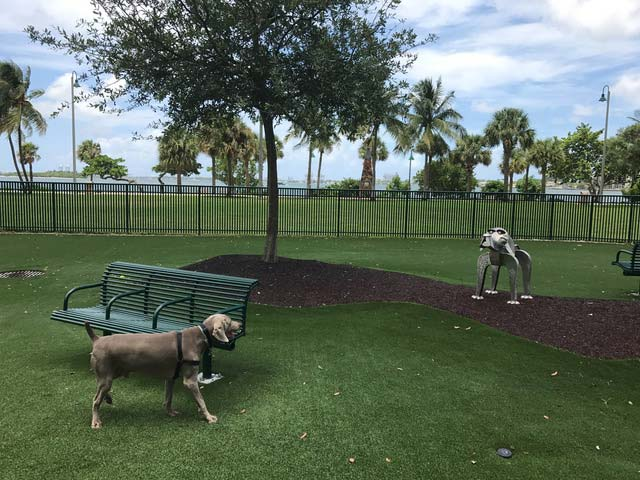 Miami Dog Run Review Margaret Pace Park