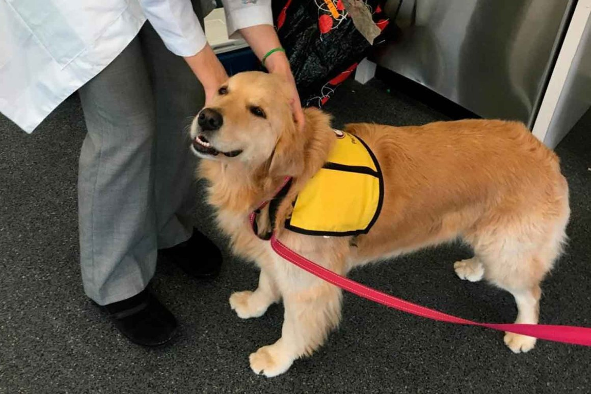 Therapy Dogs Can Bring Germs to Hospitals