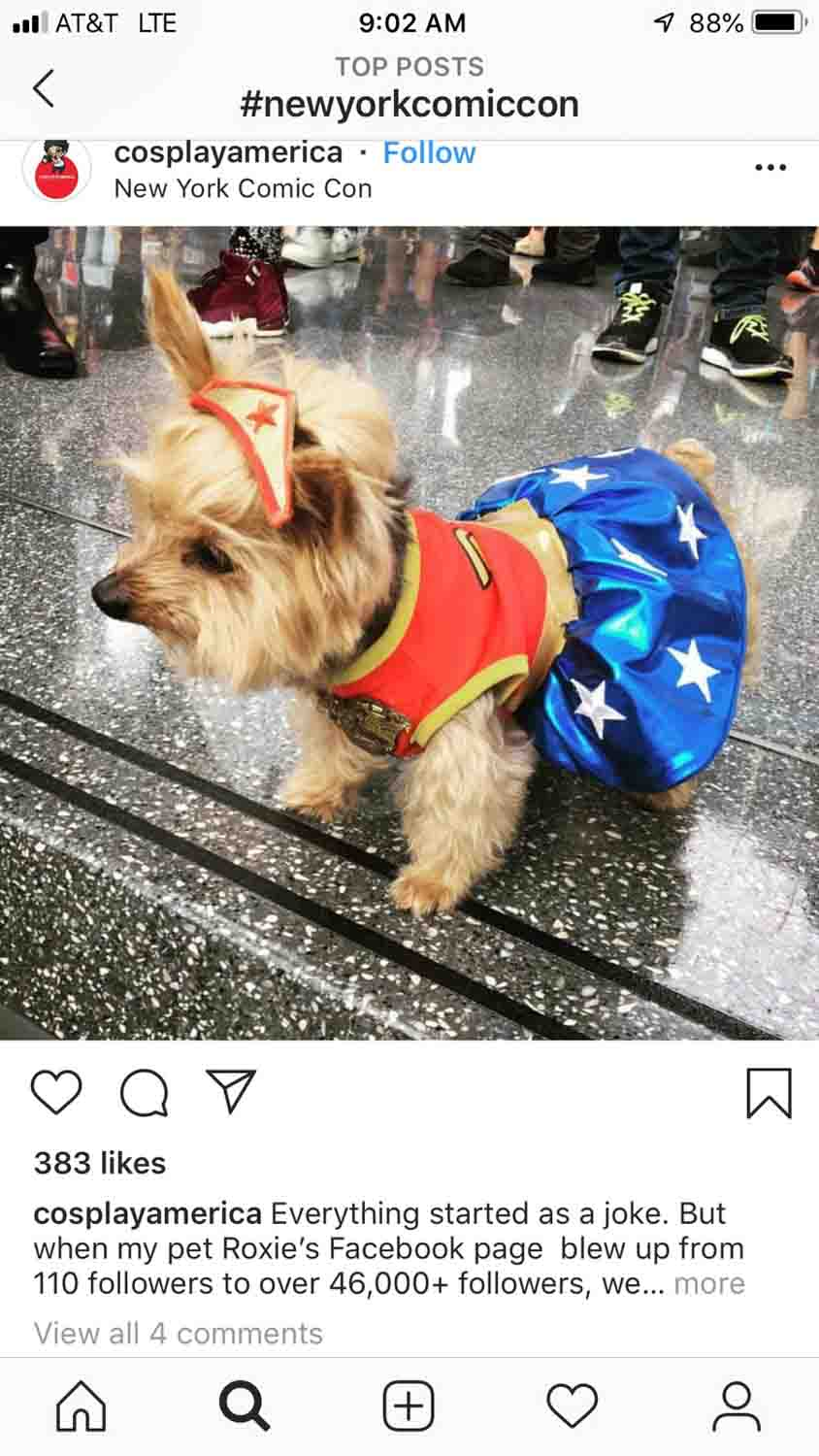 New York Comicon Dogs