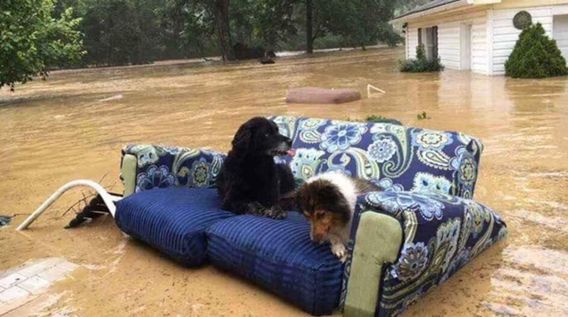 FEMA Helps Pets During Disasters