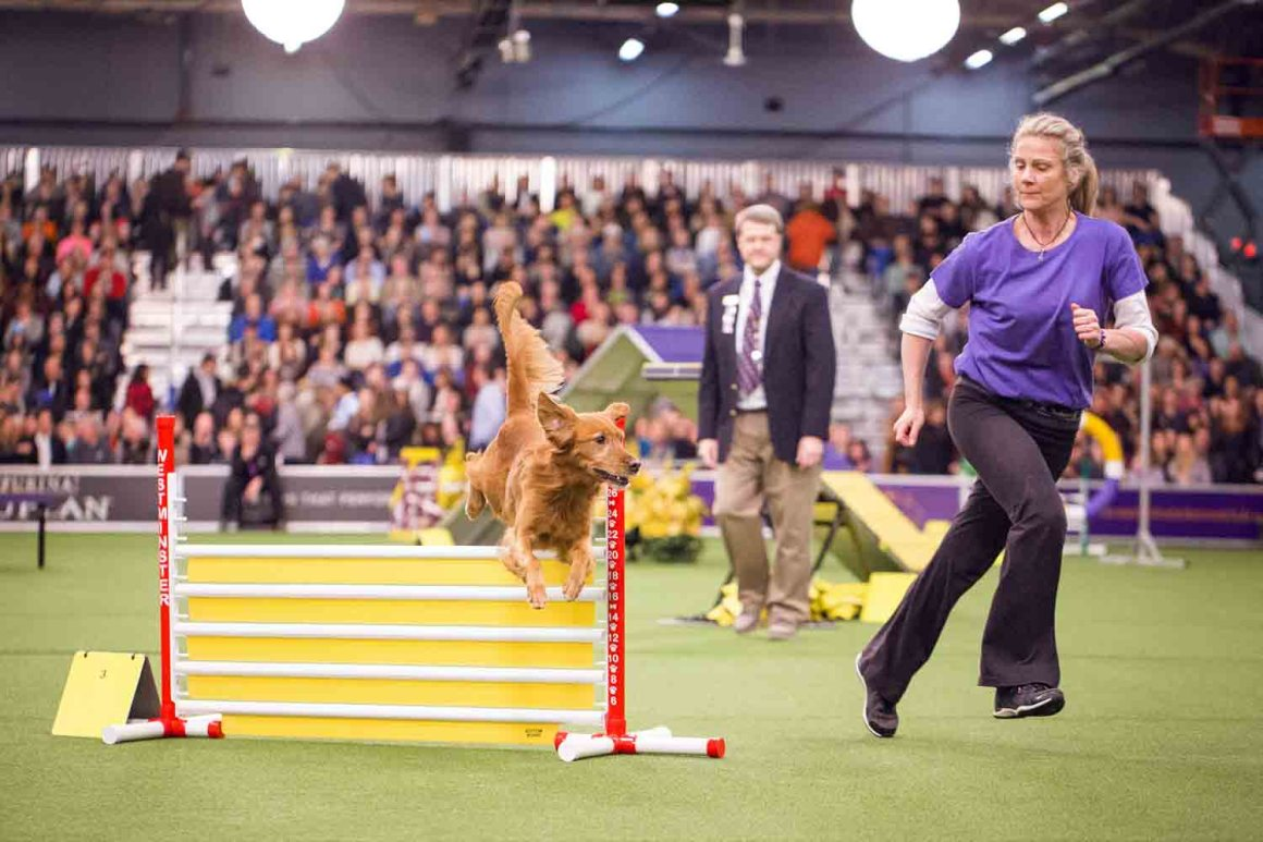 Westminster Agility Championship (Photo: Natalie Siebers)