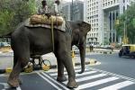 Avec 6,5 millions de voitures à Delhi, le respect du code de la route s'impose.