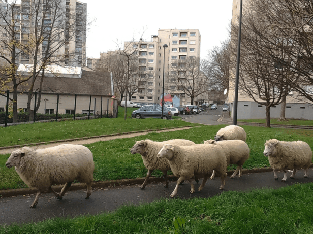 Pastoralisme Urbain - Les Berges Urbains - Photo Guillaume Leterrier